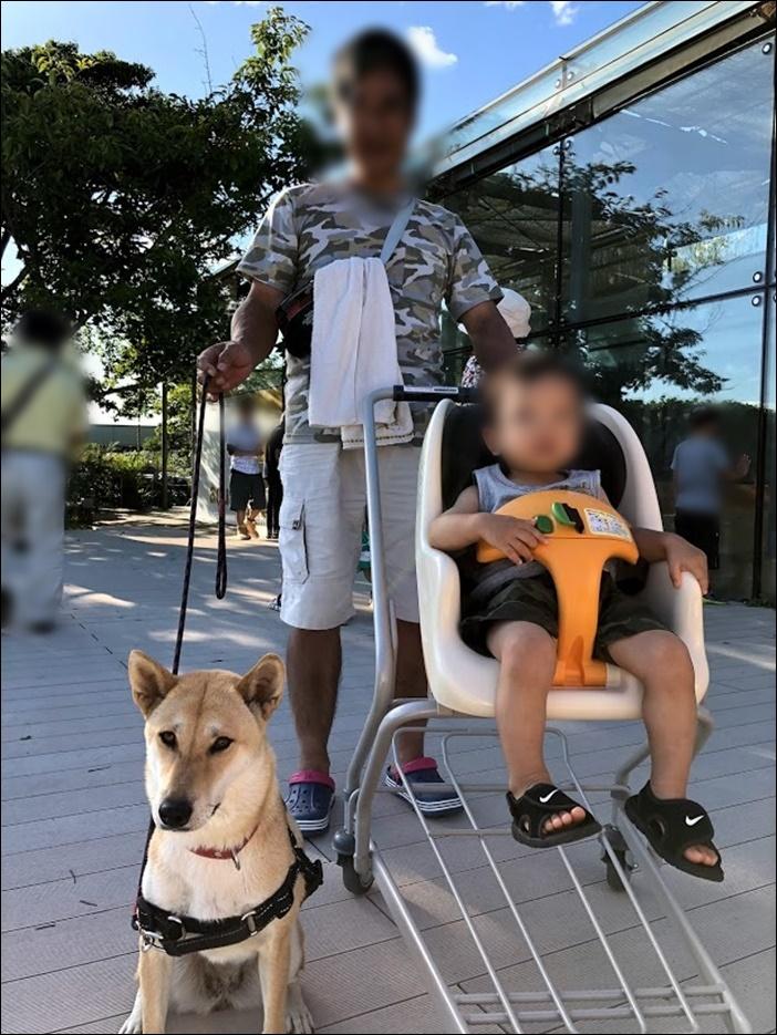 柴犬のさくらちゃん