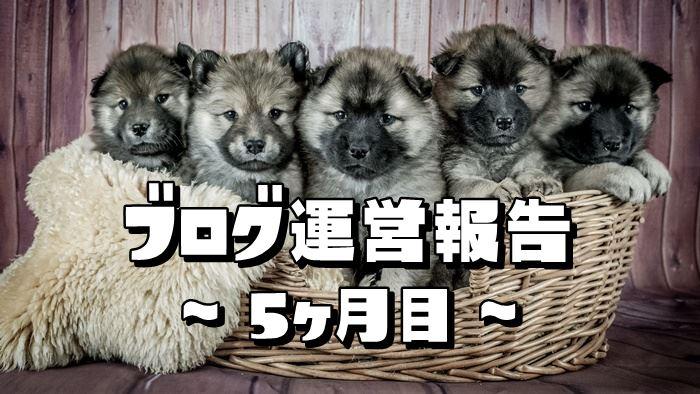 【ブログ運営報告】5ヶ月目