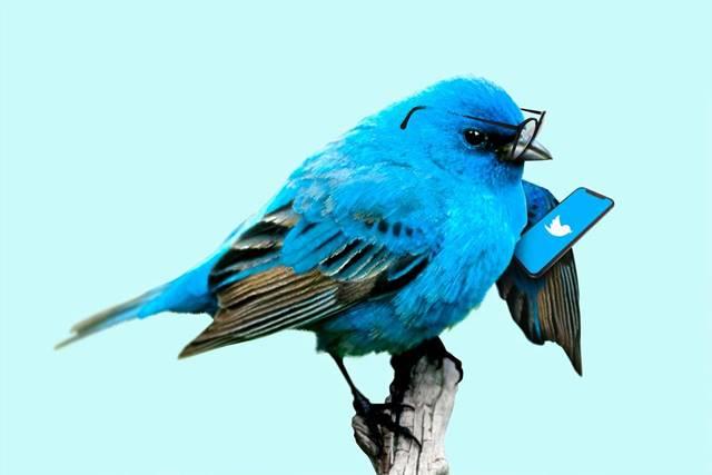 Twitterをしているトリ